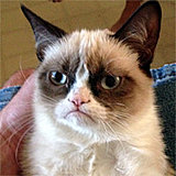 Click image for larger version  Name:Grumpy-Cat.jpg Views:30 Size:16.5 KB ID:72844
