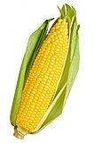 Click image for larger version  Name:ear-of-corn.jpg Views:10 Size:112.5 KB ID:77775