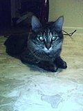 Click image for larger version  Name:Vlad2.jpg Views:15 Size:34.3 KB ID:86297