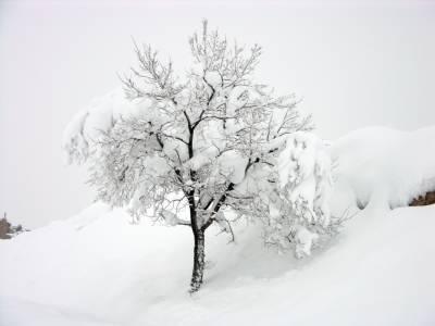 Name:  snow-06-1.jpg Views: 997 Size:  12.0 KB
