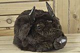 Click image for larger version  Name:Buffalo-Hat_8467-l.jpg Views:42 Size:143.2 KB ID:46235