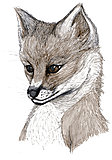 Click image for larger version  Name:Fox.jpg Views:28 Size:2.88 MB ID:73312