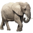 Name:  elephant.png